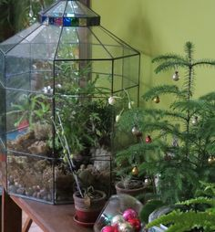 Terrarium with a little stained glass Terrarium with a little stained glass Box Houses, Fairy Houses, Glass Conservatory, Biorb, Outdoor Crafts, Glass Terrarium, Glass Boxes, Vivarium, Container Gardening