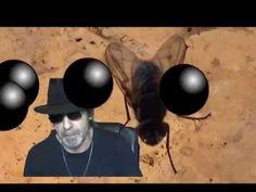 Warum eine Fliege genauso intelligent ist, wie ein Mensch ...