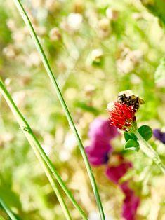 Un jardin végétal pour un dépaysement garantit. #castorama #inspiration #decoration #ideedeco #tendancedeco #jardin #exterieur #amenagement #plantes #vegetal