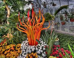 blown glass plants by dale chihuly