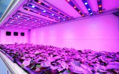 How To Choose the Right Grow Light   #grow #plants #growyourown #hydro #greenhouse #garden #gardening #homegrown