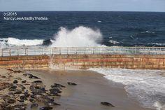 King Tide & Harbor Seals at Children's Pool in La Jolla, San Diego.  www.nldesignsbythesea.com