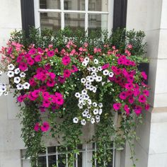 How to Plant Potted Flowers Outdoors in the Soil : Garden Space – Top Soop Window Box Plants, Fall Window Boxes, Window Box Flowers, Balcony Flowers, Window Planter Boxes, Flower Planters, Flower Pots, Fall Planters, Container Gardening Vegetables
