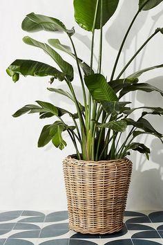 BOHO STYLE: The Green Velvet Sofa, 6+ Stylish Options - Hey, Djangles. Basket Planters, Rattan Basket, Hanging Planters, Rattan Planters, Plant Basket, Wicker, House Plants Decor, Plant Decor, Small Ornamental Trees