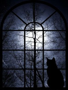Cat - cat art: A black cat is gazing at the full moon night through an arched window. Crazy Cat Lady, Crazy Cats, Halloween Art, Halloween Night, Happy Halloween, Halloween Window, Samhain Halloween, Halloween Clothes, Halloween Decorations
