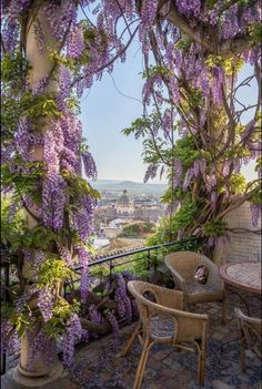 [Wisteria framing the balcony view of the city.  Lovely and fragrant, and it adds privacy as well. Notice the interesting flooring.]