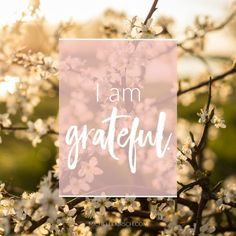 Mantra: I am grateful. Choose your own Positive Affirmations to download or share.