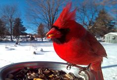 I Put A Bird Feeder Outside My Window And Spent One Year Photographing Birds That Flew To Eat
