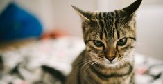 Study reveals what cat owners have suspected all along: Your cat recognizes your voice when you call — he just chooses not to respond. Stress, What Cat, Matou, View Photos, Cute Animals, Instagram, Study, Florence, Aquarium