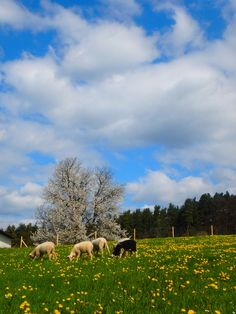 Frühlingsschafweide Mountains, Nature, Travel, Animals, Naturaleza, Viajes, Animales, Animaux, Trips