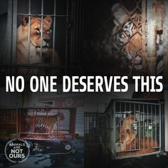 Animals in the #circus spend much of their miserable lives in tiny cages. #BoycottTheCircus #NotOurs
