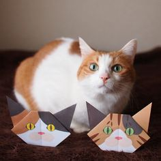 Catchy Cat Origami