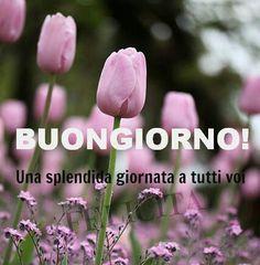 Ancora un buongiorno a tutti voi...buona primavera...