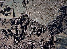 Latón (42 % Zn) moldeado en arena, x50 aumentos
