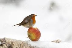 All Birds, Cute Birds, Pretty Birds, Little Birds, Beautiful Birds, Robin Redbreast, In Natura, Robin Bird, Christmas Bird