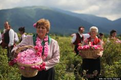 Rose Valley Exists In Bulgaria, And Heres Why You Should Visit
