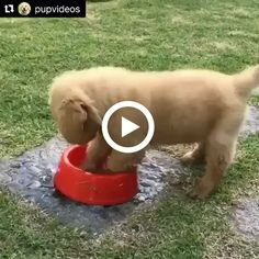 can you tell me: how to drink water bowl,funny,playing water Cute Baby Animals, Animals And Pets, Funny Animals, Funny Baby Photography, Domestic Cat Breeds, Dog Milk, Funny Baby Memes, Cat Watch, Cute Funny Babies