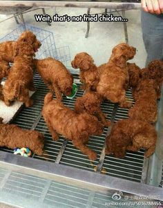 """Haha I just showed this to my teo yr old and she goes, """"oh dinner time?"""" What do you see? """"Its chicken mommy"""" haha no its puppies """"no mom its chicken. Thanks Amelia haha Can't Stop Laughing, Laughing So Hard, Kfc, Funny Pins, Funny Memes, Funny Stuff, Random Stuff, Dog Memes, Jokes"""
