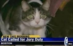 funny news headlines - Google Search
