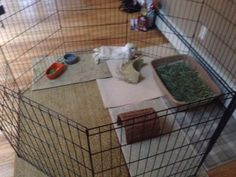 Rabbit Ideal Indoor Housing  It's strongly suggest that cage size is 4 times size of the bunny. Play pens give them more space to run and the flexibility to arrange it different ways. Diy Bunny Cage, Bunny Cages, Rabbit Cages, Rabbit Pen, Pet Rabbit, House Rabbit, Indoor Rabbit Run, Bunny Play Pen, Rabbit Playpen