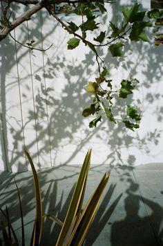 Untitled by Brian W. Ferry