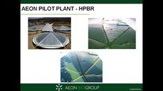 Desarrollo de su propio sistema de cultivo masivo de algas.