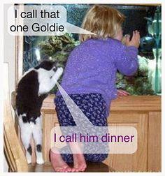 I call him dinner