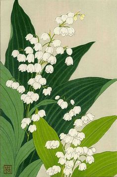 Lily of the Valley. SHODO KAWARAZAKI. JAPAN. 1954. Woodblock Print