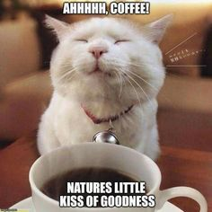 45 lustige Kaffee Meme, die Sie zum Lachen bringen – Con Cafe – 45 Funny Coffee Memes That Make You Laugh – Con Cafe – # Cafà © I Drink Coffee, Coffee Is Life, I Love Coffee, My Coffee, Coffee Beans, Funny Coffee, Coffee Lovers, Happy Coffee, Fresh Coffee