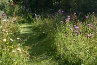 Wildflower area for a small garden