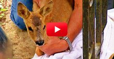 When This Trapped Fawn Was Finally Reunited with His Mother, My Heart Almost Burst! | The Animal Rescue Site Blog