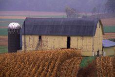 Yellow Dairy Barn in North East Iowa - mnpioneer's Photos800 x 537 | 173.2 KB | www.pioneerphotography.com