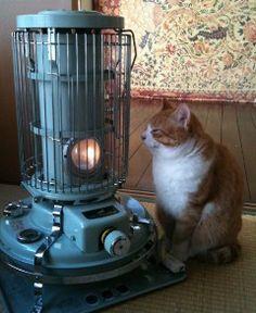 猫 : 温まるトラ吉 | Sumally