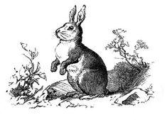 Vintage Clip Art - Precious Bunny Engraving - The Graphics Fairy