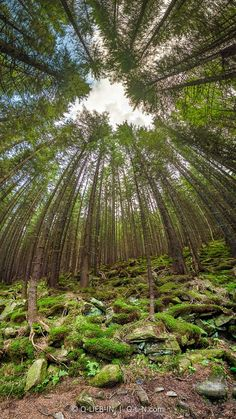 Deep forest - Deep forest overhead view whith unusual angle vertical panorama -Pano from 7 horisontal frames