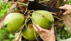 Kokoswasser ist in aller Munde und soll wahre Wunder bewirken. Doch was ist wirklich dran an dem Hype? Wir verraten Ihnen das Geheimnis von Kokosnusswasser