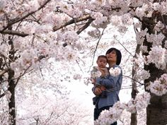 cherry blossom viewing */*