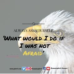 What would I do if I was not afraid?