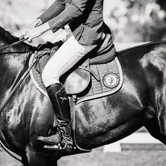 Over 6 days, i have shot for around 48 daylight hours. I'm tired but I'm very content. Today was showjumping. I adore this equestrian discipline and the people that have embraced me and my business. Goodnight all. #thankyou #horseart #equineart #showjumping #equestrian #calicopony #toowoombaphotographer