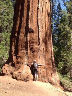 How to Hike to the Mariposa Grove in Yosemite