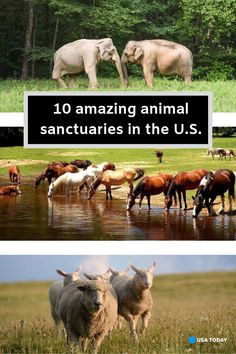 Amazing animal sanctuaries all across the country are giving neglected and abused animals a second lease on life. Here are 10 of the best sanctuaries helping companion animals and wild animals. Wild Animal Sanctuary Colorado, Wild Animal Rescue, Donkey Rescue, Golden Puppy, Elephant Sanctuary, Animal Society, So Little Time, Farm Animals, Pet Care