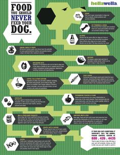 I love how the skeleton of the dog was incorporated in the food that dogs should never eat. The unity and simplicity of the info graphic is appealing. I think we should strive to make sure that our info graphics are as dynamic, and not so square and solid.