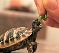 17 Endearing Images Of Animals Eating Food And Loving It
