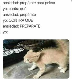 Funny Animal Memes, Funny Animal Pictures, Funny Images, Funny Spanish Memes, Spanish Humor, Funny Cute Cats, Quality Memes, Comedy Central, Stupid Memes