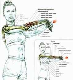 rasa yoga cafe...: Stretch the Forearm Muscles!
