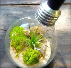 Ideas For Recycling Old Light Bulbs 2