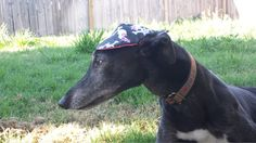 Dog Cap / Visor by DoggyDayzz on Etsy