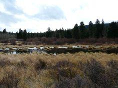 10월 소풍 @ Lily lake near Estepark, CO