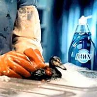 My fav. dish soap is also used to save animal victims of oil spills. Go Dawn!