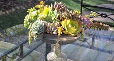 <p>The textures and colors of succulents make them a visually interesting — and appealing — arrangement, inside and outside your home.</p>